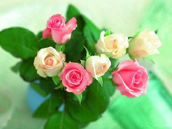 roses-beautiful-flower-wallpaper